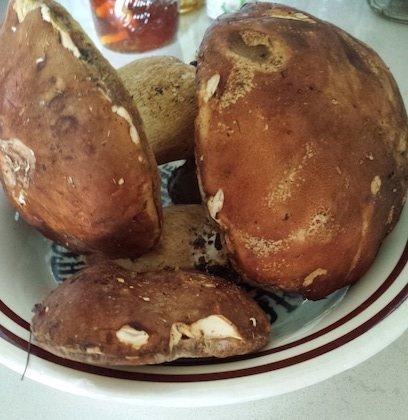 tortiglioni ai funghi porcini crudi