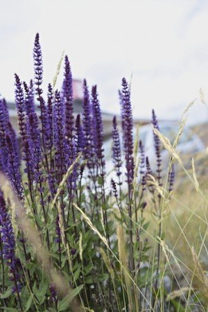 Stoccolma, io ed un solstizio d'estate - lavanda Skansen Stoccolma