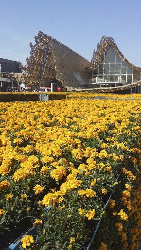 Padiglione Cina per irpinia, Expo 2015 ed io