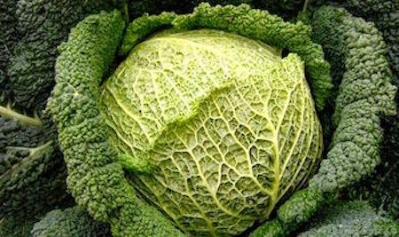 differenza fra verza e cavolo cappuccio per la ricetta dell'insalata di cavolo cappuccio rughetta e noci