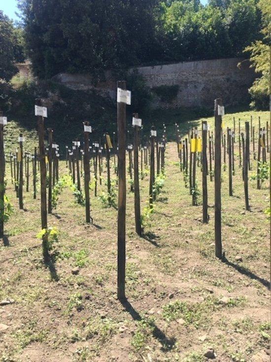 VIGNETO ITALIA a Roma Hortus Vini